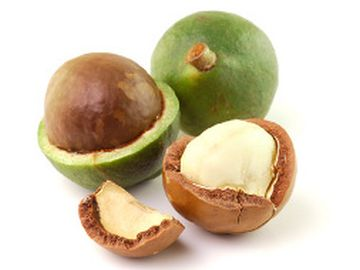 Bild einer Macadamia Nuss mit Schale